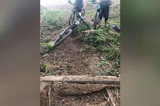 Who sets traps on logging roads?