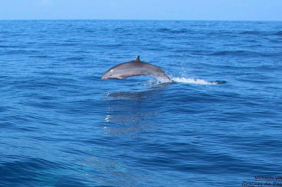 dauphins-credit-grainesdepassions-on-Visualhunt.com-CC-BY-NC-SA