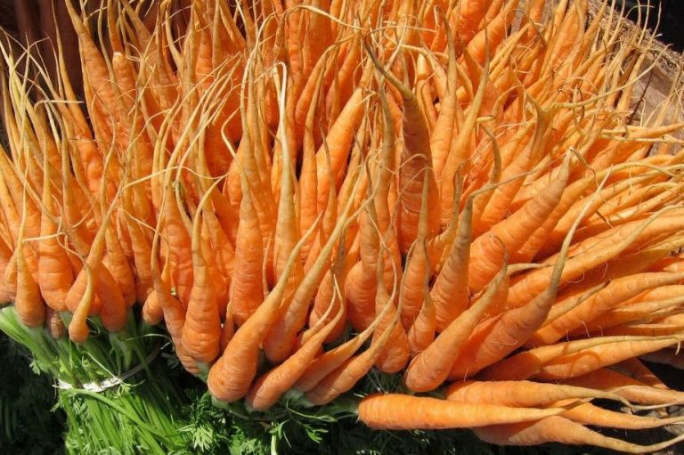 carrots-fresh-pxHere-768x511