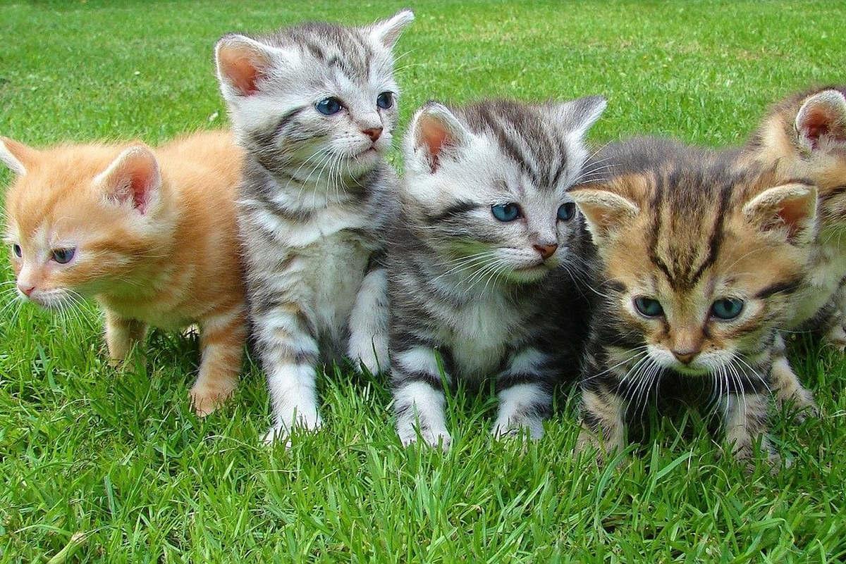 kittens (Pixabay)